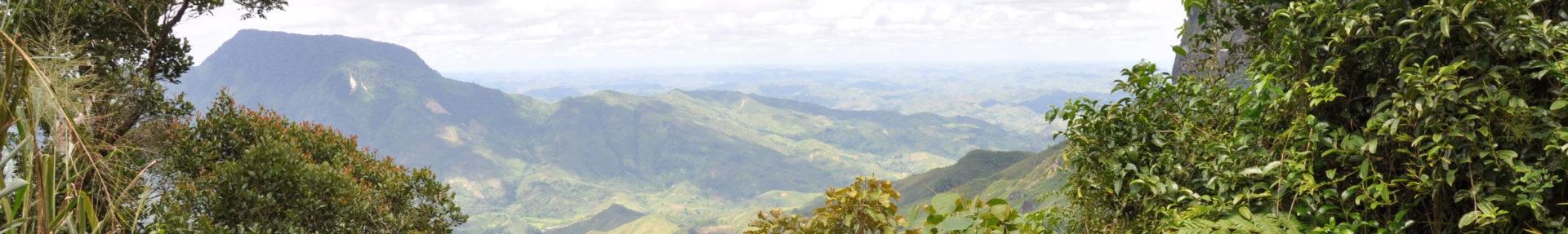 Madagaskarvanilje